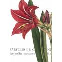 "Wild Port""Botanique 1""canvas moderni 3 pezzi o singoli verticale con amarillis, 120x80 cm o altre misure"