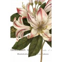 "Wild Port""Botanique 1"" 3 pieces set or single art pictures with close up red flower over white base"