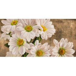 Jenny Thomlinson-Daises In The Moonlight. Magnificent white daises picture for Home Decor