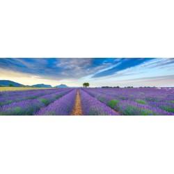 """Krahmer""""Lavender Field""""quadro fotografico d'Autore Originale con campo di lavanda panoramico"""
