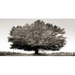 """Ferrua""""Un secolo di tramonti BW"""" quadro d'Autore Originale- foto con quercia in bianco e nero"""