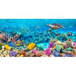 """Pangea""""Sea Turtle and fish,Maldivian Coral Reef"""" quadro con barriera corallina e pesci. Supporti HQ e Misure a Scelta"""