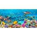 "Pangea""Sea Turtle and fish, Maldivian Coral Reef""- HQ Photo Picture for Home Decor, like an Aquarium"