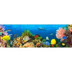 """Pangea""""Life in the Coral Reef, Maldives"""" quadro con barriera corallina e pesci delle Maldive. Supporti HQ e Misure a Scelta"""
