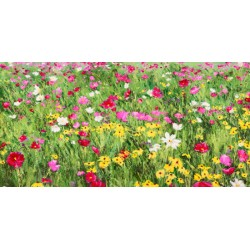 "Mei ""Field of Flowers"" HQ Original print on Canvas, Paper or Ready to Hang product. Large sizes available"