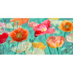 cinthya Ann - poppies in bloom HQ Original print on Canvas, Paper or Ready to Hang product. Large sizes available