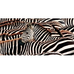 "Pangea ""Herd of Zebras""-Quadro Fotografia di Zebre Stampa Originale d'Autore"