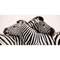 "Anonimo ""Zebras in love"" high quality print"