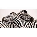 """Anonimo """"Zebras in love""""-Quadro Fotografia di Zebre Stampa Originale d'Autore"""