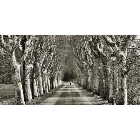 """Fulvio Ferrua """"Come le foglie"""" Quadro Stampa Alta Risoluzione con alberi"""