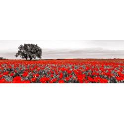 A.Campo di Papaveri-Quadro Fotografico in Bianco Nero e Rosso per Soggiorno Cucina o Altro