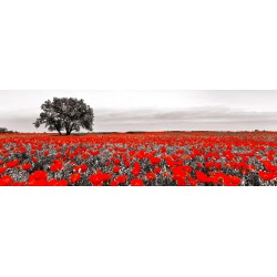 Tree in a poppy field,Anonymous