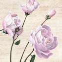 Dellal Remy - Classica III. Quadro con Rose Bianche Romantiche - Stampa d'Autore su Tela Cotone per Soggiorno o altro