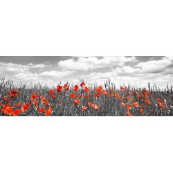 Papaveri in un campo di grano, Bavaria. Frank Krahmer-Quadro Fotografico in Bianco Nero e Rosso per Soggiorno Cucina o Altro