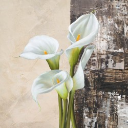 Natura I - jenny Thomslinson Quadro con Calle Bianche Romantiche - Stampa d'Autore su Tela Cotone per Soggiorno o altro