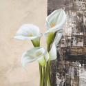 Natura I - jenny Thomslinson White Callas on high quality print