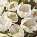 Bianco I- Leonardo Sanna Quadro con Tulipani Bianchi Romantici - Stampa d'Autore su Tela Cotone per Soggiorno o altro