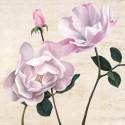 Dellal Remy - Classica II. Quadro con Rose Bianche Romantiche - Stampa d'Autore su Tela Cotone per Living o altro