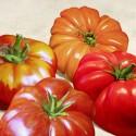 Tomatoes - Remo Barbieri Quadro con invitanti pomodori rossi - Stampa d'Autore su Tela Cotone per Soggiorno o altro