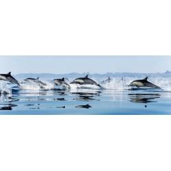 Delfini-A.-Quadro Fotografico a Colori per Soggiorno Cucina o Camera