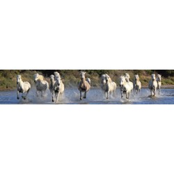 Cavalli in Camargue-JS Studio.Stampa Panoramica Alta Risoluzione,Supporti e Misure Varie